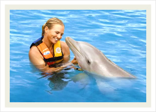 Sea Life Park Hawaii tours and the best swim with the dolphins adventure tour discounts.